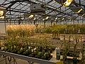 Serres Arabidopsis IJPB Versailles-2-cliche Jean Weber (23130824082).jpg