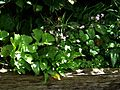 Shade bed - Flickr - peganum (6).jpg