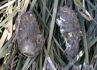 Pellet (ornithology) material regurgitated by certain birds