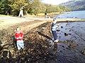 Shore of Loch Lomond at Tarbet - geograph.org.uk - 1202352.jpg