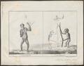 Simia satyrus - 1700-1880 - Print - Iconographia Zoologica - Special Collections University of Amsterdam - UBA01 IZ19800039.tif