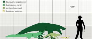 Baurusuchus - Size of B. salgadoensis (1) and other Brazilian Cretaceous Crocodylomorphs