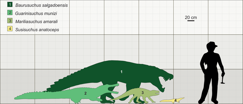 Size of Brazilian fossil crocodylomorphs