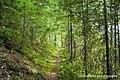 Skagit Bluff Trail.jpg
