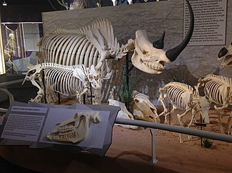 Skeletons: Museum of Osteology - Image: Skeletons Animals Unveiled Rhino Skeleton