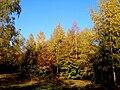 Slovakia autumn 18.JPG