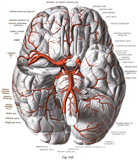 Leptomeningeal collateral circulation small blood vessels in the brain connecting larger arteries