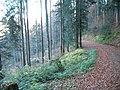 Sommerlicher Herbst Herrenstuhl - panoramio (8).jpg