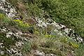 Son habitat naturel - réserve des Follatères de Fully - Valais.JPG