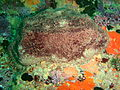 Sponge at Rheeder's Reef P2277165.JPG