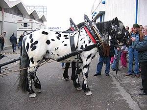 "Noriker - Pair of ""tiger"" Noriker horses at Fieracavalli, Verona"