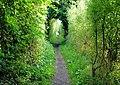 St Swithun's Way - geograph.org.uk - 981781.jpg