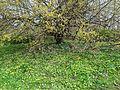 Stadtpark–L1450090.jpg