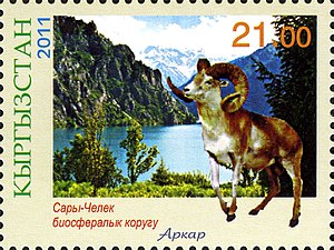 Kyrgyzstan - Marco Polo sheep on a Kyrgyzstan stamp
