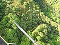 Starr-141014-2228-Caesalpinia decapetala-aerial view-Kakipi Gulch Haiku-Maui (25221001226).jpg