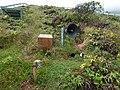 Starr-170727-0565-Bobea elatior-Newells Shearwater burrow boxes decoys and attractant calls speaker-Makamakaole-Maui - Flickr - Starr Environmental.jpg