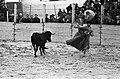 Stierengevecht in Tilburg tgv 65 jarig bestaan van Roomskatholieke Hogeschool, Bestanddeelnr 915-1488.jpg
