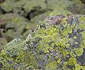 Stone & lichen (4038719119).jpg