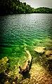 Submerged Log (42248632995).jpg
