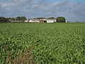 Sugar beet field by Wades Farm - geograph.org.uk - 1558954.jpg