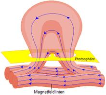 Ein Sonnenfleck entsteht: Bündel von Magnetfeldlinien treten aus dem Inneren der Sonne aus.