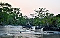 Sundarbans in the afternoon 3.jpg