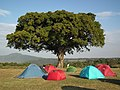 Tanzania 3957 Nevit.jpg