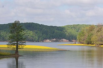 Tennessee National Wildlife Refuge - Image: Tennessee national wildlife refuge