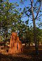 Termite mound GKVK Banglore.jpg