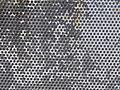 Texture - P7220296.JPG