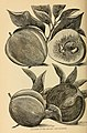 The California fruits and how to grow them. A manual of methods which have yielded greatest success- with lists of varieties best adapted to the different districts of the state (1910) (20326580530).jpg