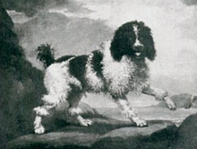 The Poodle 1700s Painting Of Traditional