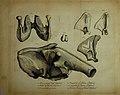 The animal kingdom (Plate) (6217527156).jpg