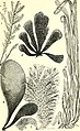 The common objects of the sea shore - including hints for an aquarium (1860) (14762756701).jpg