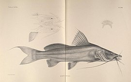 The fishes of the Nile (Pl. LVIII) (6815503330).jpg