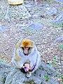 The monkeys.jpg