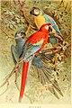 The royal natural history (1893) (14598090750).jpg