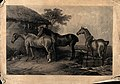 Three horses standing near a thatched cottage in the moors. Wellcome V0020862.jpg