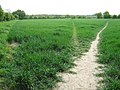 Three paths from Lenham - geograph.org.uk - 1291044.jpg