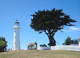 Tiritri Matangi lighthouse and macrocarpa tree.jpg