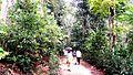 Tourists at Lawachara national park.jpeg