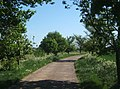 Track heading south from Bower Farm - geograph.org.uk - 797083.jpg