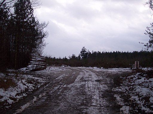 Track junction on Bridleway in Hemsted Forest - geograph.org.uk - 1713940