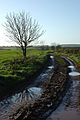Track to Bendall's Farm - geograph.org.uk - 286615.jpg