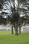 Tree 9747 (9569169294).jpg