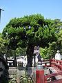 Tsurugaoka hachimangu, 08.JPG