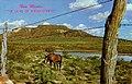 "Tucumcari NM - """"""""The Land of Enchantment."""""""" (NBY 434311).jpg"