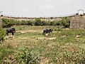 Two giant elephants.jpg
