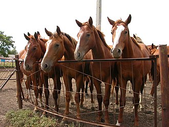 Horse markings - These young horses, though all the same color, exhibit uniquely different markings, which can be used to identify individual horses