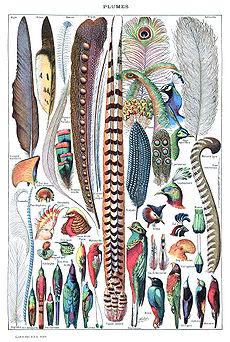 Veer Vogel Wikipedia
